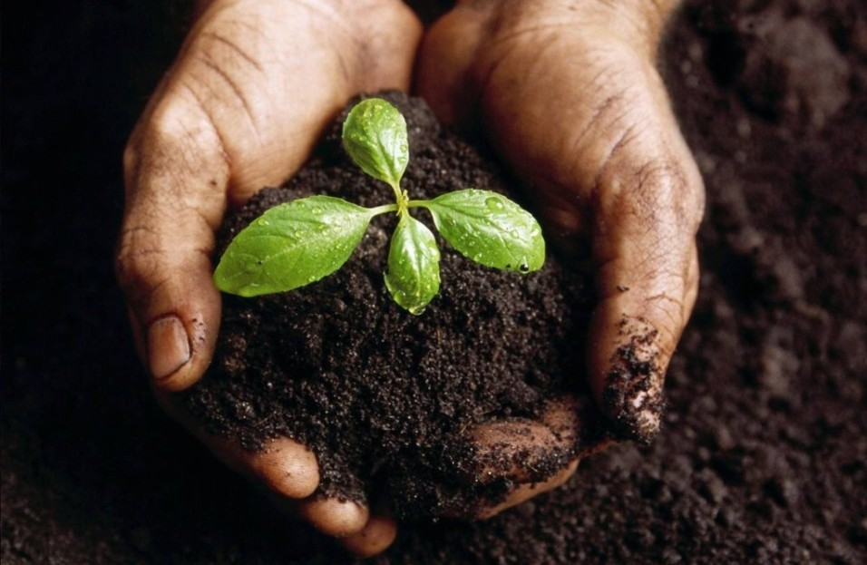 Soil Preservation